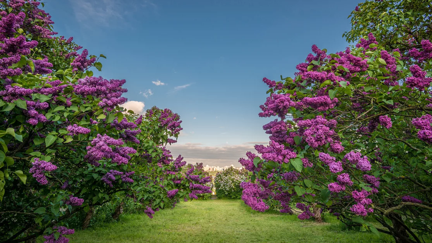 Где красивые места  в Москве: 5 лучших цветущих садов