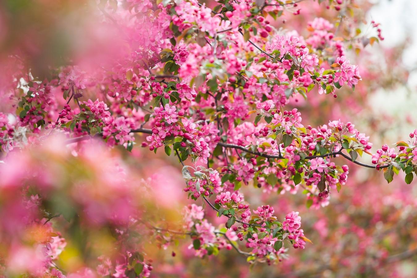 Где красивые места в Москве: 5 лучших цветущих садов - Красивые места в Москве